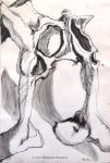 """16. Horse Pelvis, ink on paper, 23"""" x 16"""", $20"""